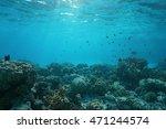shallow ocean floor with coral... | Shutterstock . vector #471244574