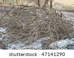 Heap Of Cut Branches With Green ...