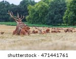 Small photo of Close study of Deer in the great Royal park Richmond London England