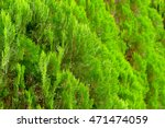 pine leaves background... | Shutterstock . vector #471474059