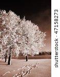 rime on tree | Shutterstock . vector #47158273