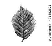 engraving birch leaf hand drawn ...   Shutterstock .eps vector #471582821