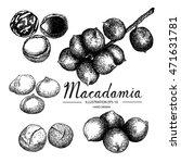 macadamia   fruit vegetable...   Shutterstock .eps vector #471631781
