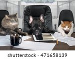 Stock photo businessmen in office dog head and cat employees managers different characters personality 471658139