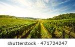 Vineyard  Nature Landscape