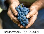 hand holding fresh bunch of... | Shutterstock . vector #471735371