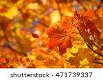 beautiful nature background of... | Shutterstock . vector #471739337