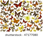 butterflies background | Shutterstock . vector #47177080