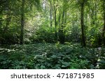 deciduous forest. forest trail... | Shutterstock . vector #471871985