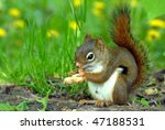 Chipmunk Seating And Eating A...
