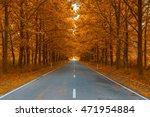 Road In Autumn Woods