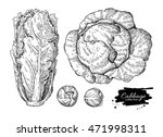 cabbage hand drawn... | Shutterstock . vector #471998311