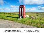 Sheep In A Red Telephone Box O...