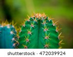 Close Up Of Globe Shaped Cactu...