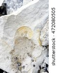 Small photo of collecting ammonite fossil in a limestone quarry.