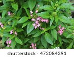 Tiny Pink Star Flowers On Gree...