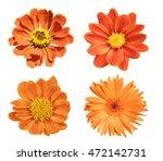 Orange Flower Isolated On Whit...