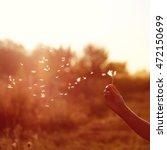 flying dandelion in woman's... | Shutterstock . vector #472150699