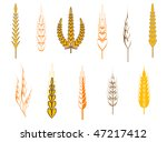 Ripe wheat ears as an agriculture concept. Vector version is also available - stock photo