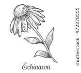 Echinacea Flower  Leaf  Plant....