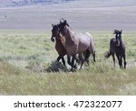 Trio Of Galloping Wild Horses...