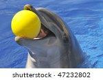 Bottlenose Dolphin  Tursiops...