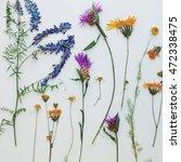 dried wildflowers. herbarium....   Shutterstock . vector #472338475