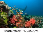 reef manta approaches cleaning... | Shutterstock . vector #472350091