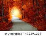 Fantastic Autumn Forest With...