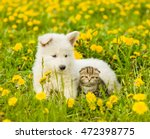 Stock photo puppy and kitten lying together on a dandelion field 472398775
