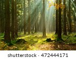 autumn  forest of spruce trees... | Shutterstock . vector #472444171
