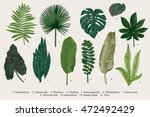 Set Leaf. Exotics. Vintage vector botanical illustration. Colorful. | Shutterstock vector #472492429