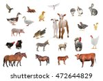 livestock isolated on white... | Shutterstock . vector #472644829