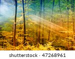lights in the forest | Shutterstock . vector #47268961