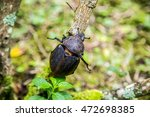 large beetle on branch   Shutterstock . vector #472698385