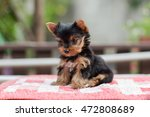 cute puppy stand on the table... | Shutterstock . vector #472808689