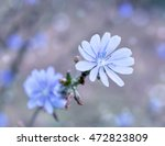 colorful blue flowers  purple... | Shutterstock . vector #472823809