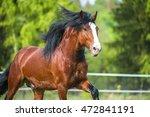 vladimir heavy draft horse... | Shutterstock . vector #472841191