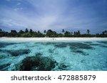 Philippines  Balicasag Island ...
