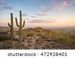 View Of  Saguaro Cactus And...