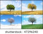 Alone Tree In For Season