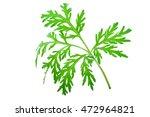 Small photo of Wormwood (absinthium)leaf
