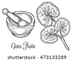 gotu kola plant with mortar and ...