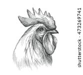 Vector Sketch Of Rooster Or...