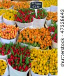 Colorful Tulips On Sale In...