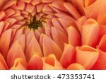 orange flower petals  close up... | Shutterstock . vector #473353741