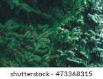 Small photo of bright green spruce tree for background image with bokeh. Pinophyta Pinopsida Pinales Pinaceae Piceoideae