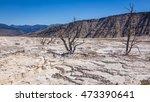 Dry Terrace Landscape. White...