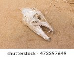 Fish Bone Skull Over The Sand...