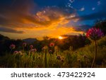 Wild Clover Flowers at Sunset Sequoia National Park California - stock photo